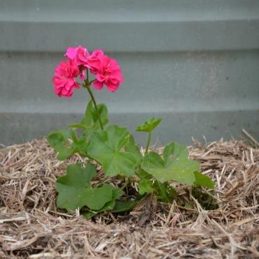Dec planting