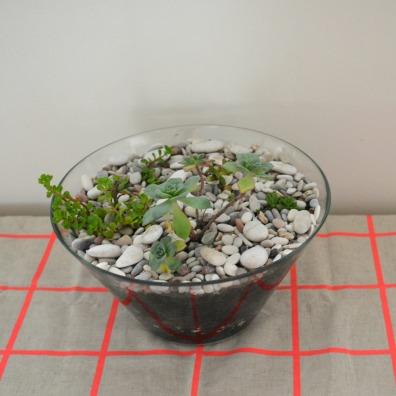 Dec succulents