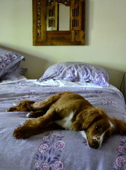 billie on bed 2