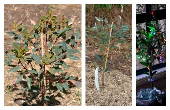 janaury christmas gum tree Collage