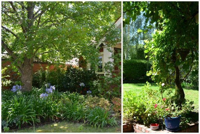 shady garden Collage